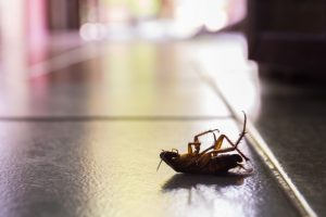 Ant Control, Pest Control in Walton-on-Thames, Hersham, KT12. Call Now 020 8166 9746
